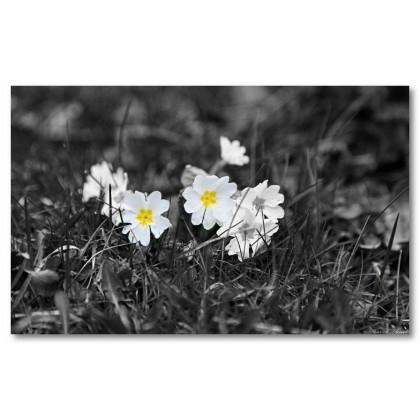Αφίσα (λουλούδια, κίτρινος)